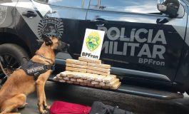 BPFron prende, em Toledo, passageira de ônibus com 26,9 quilos de maconha, que seria levada a SP