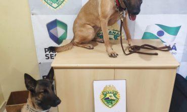 Com ajuda de cães farejadores, BPFron apreende menor com 10,2 quilos de maconha em ônibus de linha