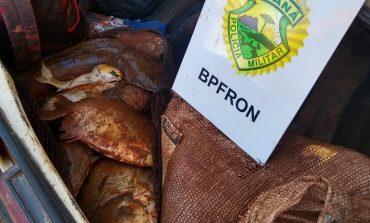 BPFron prende 4 pessoas em Cascavel com 100 quilos de peixes e moedas furtadas em fonte dos desejos