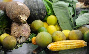 Procura por orgânicos cresce com a pandemia