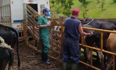Adapar mantém ritmo para garantir status sanitário e alimentos