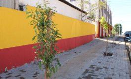 Avenida Dr. Mário Totta de Mercedes começa a receber arborização