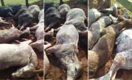 Raio mata agricultor e 30 cabeças de gado no interior de Loanda, na região Noroeste do Paraná