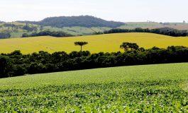Preço das terras no Paraná cresceu cerca de 12% este ano