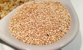 Curso de Agronomia da Unioeste/Marechal Rondon desenvolve projeto de acompanhamento de cultivo da quinoa