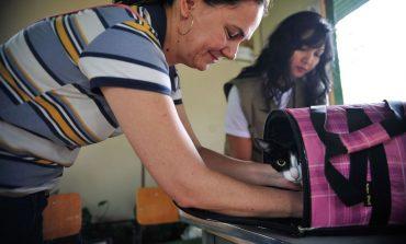 Senado aprova aumento de pena para agressores de cães e gatos