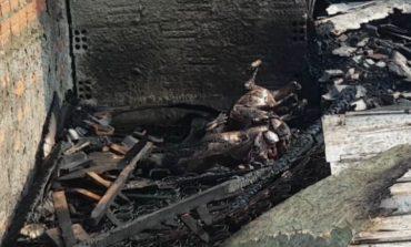 Dez cães são mortos queimados e com golpes de foice, em Curitiba