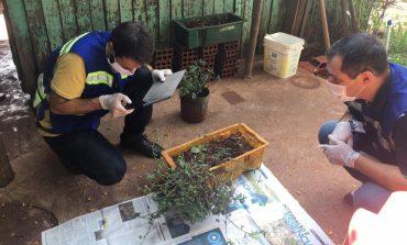 Paraná monitora caso das sementes clandestinas