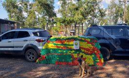 Pelotão de Operações com cães do BPFron apreende mais de meia tonelada de maconha em Pato Bragado
