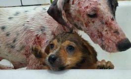 Curso prepara servidores para atendimento de maus-tratos a cães e gatos