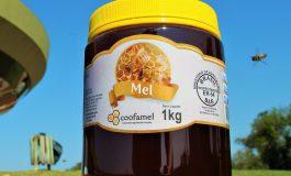 Mesmo com chuva grande quantidade de mel ainda deve ser colhida na região Oeste